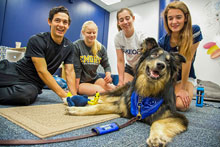 Therapy dogs support student health and wellbeing